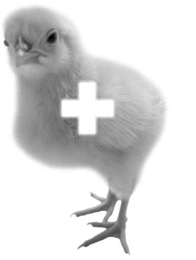 stop animal cruelty quotes. animal testing cruelty