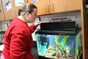 Aquatic science classes begin new project, help take care of aquariums around campus