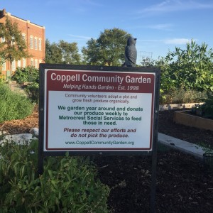 The Coppell Community Garden is located in Town Center next to City Hall. Volunteers within the community grow their own plants and donate their produce to Metrocrest Social Services every week. Photo by Kelly Monaghan.